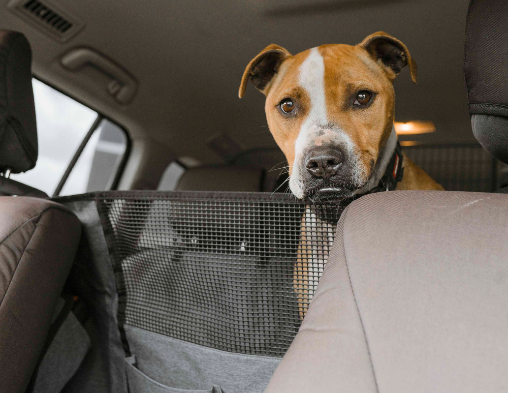 Dog Seat Buddy, Vehicle Interior Seat Space Corral And Protector For Dogs, By Navigator